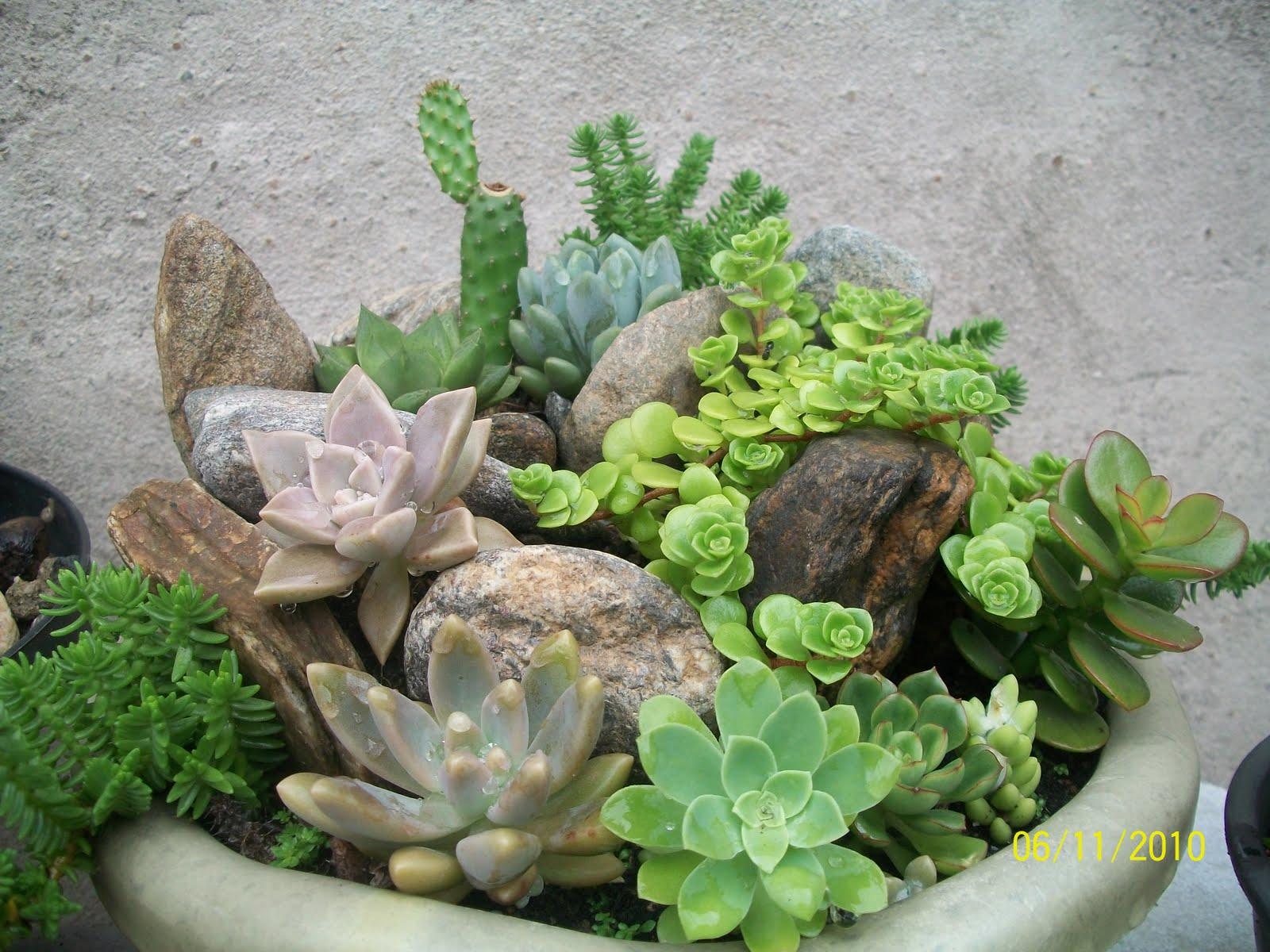 Agora com essa dicas alem de decorar você pode usar as plantas para  #6E913A 1600 1200