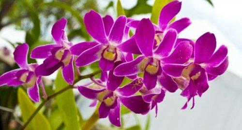 orquideas-flores-plantas-650x350