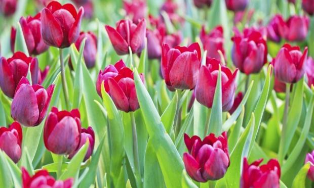 plantas jardim flores ? Doitri.com